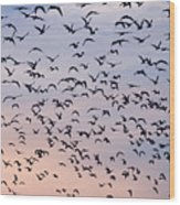 Birds A Flock Of Seagulls Wood Print