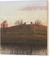 Birds And Fun At Butler Park Austin - Silhouettes 1 Panorama Wood Print