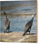 Birds And Lake Wood Print