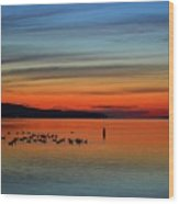 Birds At Dawn By The Buoy  Wood Print