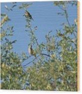 Birds At Peters Canyon Wood Print