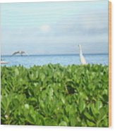 Bird's-eye View Of Hawaii Wood Print