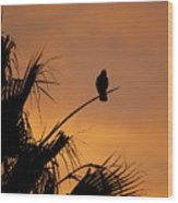 Birds Eye View Photograph Wood Print