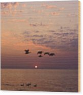 Birds Flying And Floating At Sunrise Wood Print