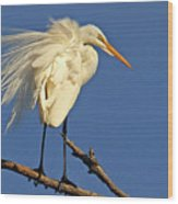Birds - Great Egret Wood Print