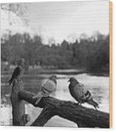 Birds I Wood Print