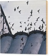 Birds In Flight Wood Print