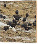 Birds In The Mud Wood Print