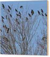 Birds In The Trees Wood Print