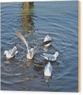 Birds Of A Feather Flock Together Wood Print