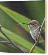 Birds Of Bc - No. 31 - Rufous Hummingbird - Selasphorus Rufus Wood Print