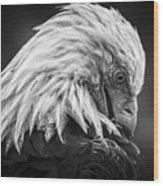 Birds Of Bc - No.30 - Bald Eagle - Keeping Clean Wood Print