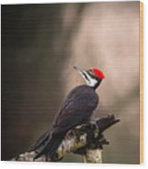 Birds Of Bc - No.6 - Pileated Woodpecker - Dryocopus Pileatus Wood Print