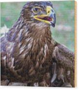 Birds Of Prey Series 3 Wood Print