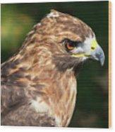 Birds Of Prey Series 5 Wood Print
