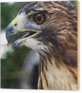 Birds Of Prey Series Wood Print