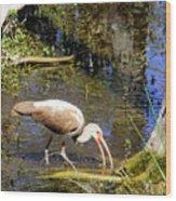 Birds Of The Everglades Wood Print