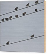 Birds On A Powerline Wood Print