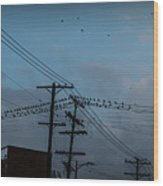 Los Angeles Birds On A Wire Wood Print