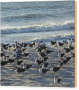 Birds On The Beach Wood Print