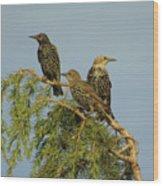 Birds-on-watch Wood Print