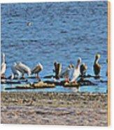 Birds Panorama Wood Print