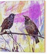 Birds Stare Nature Songbird  Wood Print