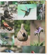 Birdsong Nature Center Collage Wood Print