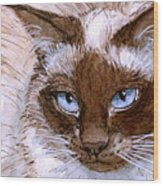 Birman Cat - Blue Eyes. Wood Print