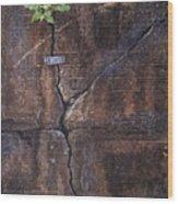 Birmingham  Wood Print