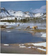 Biscuit Basin Elk Herd Wood Print