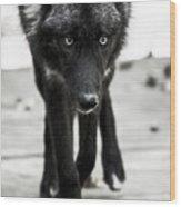 Bishop Wolf Wood Print