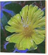Bishop's Cap Cactus Wood Print