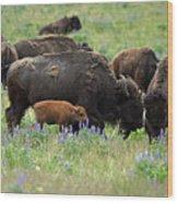 Bison And Lupine Wood Print