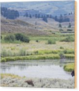Bison At Slough Creek Wood Print