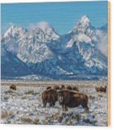Bison At The Tetons Wood Print