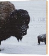 Bison Bison Bison In The Snow Wood Print