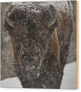 Bison Buffalo Wyoming Yellowstone Wood Print