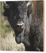 Bison Bull Wood Print