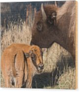 Bison Calf And Its Mother Wood Print