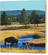Bison Wood Print by Carrie Putz