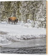 Bison Country  8101 Wood Print