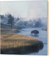 Bison Crosses The Firehole River Wood Print
