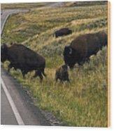 Bison Disrupting Traffic Wood Print