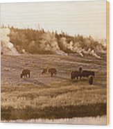 Bison Firehole River Yellowstone Wood Print