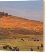 Bison Grazing On Hill At Hayden Valley Wood Print