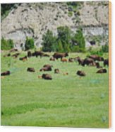 Bison Herd II Wood Print