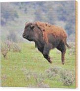 Bison In Flight Wood Print