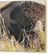 Bison In Hiding Wood Print