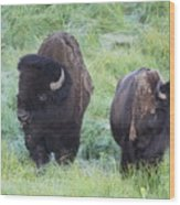 Bison In Love Iv Wood Print